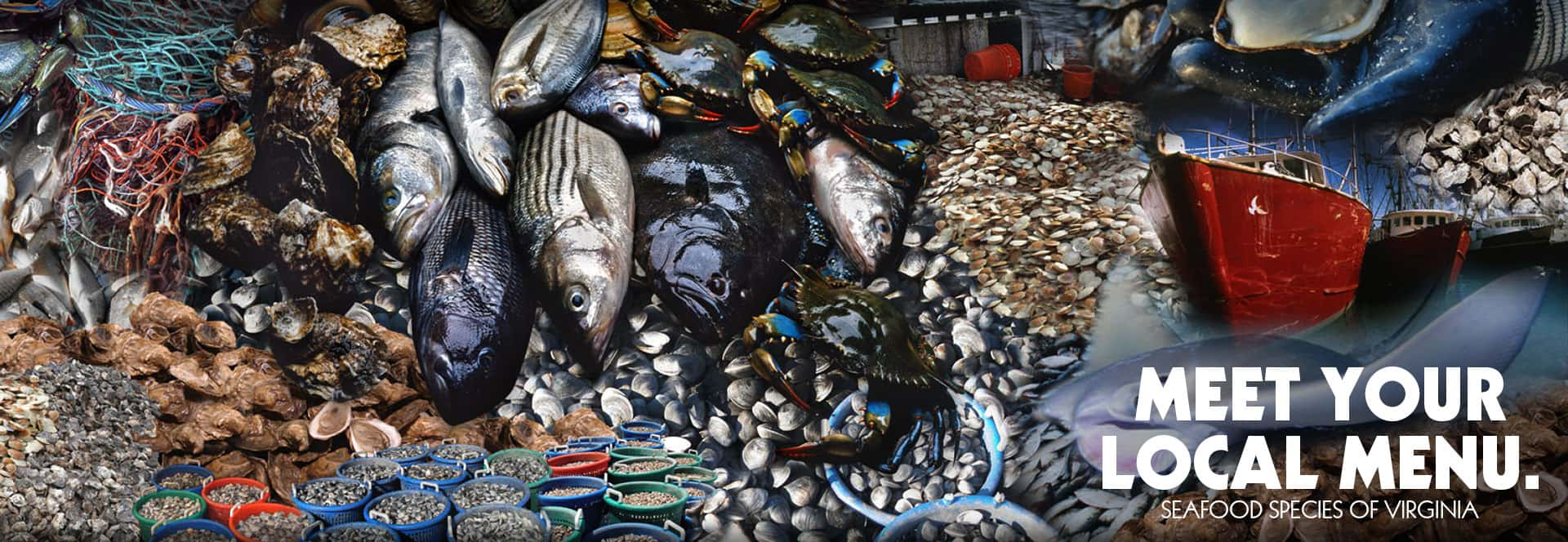 Meet Your Local Menu — seafood species of Virginia.